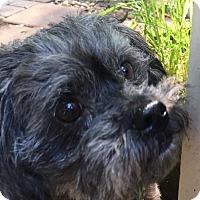 Adopt A Pet :: Brielle - Alpharetta, GA