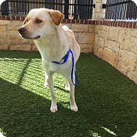 Adopt A Pet :: Sunny D - Denver, CO