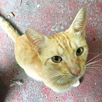 Adopt A Pet :: Zane - Waggaman, LA