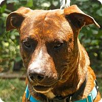 Mixed Breed (Medium) Mix Dog for adoption in Albuquerque, New Mexico - Jagger