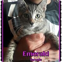 Adopt A Pet :: Emerald - Richmond, CA