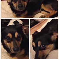 Adopt A Pet :: Bandit - Evansville, IN