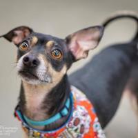 Adopt A Pet :: Sonny - Santa Fe, TX