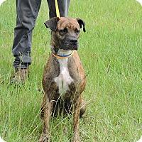 Adopt A Pet :: Dixie - Washington, GA