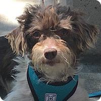 Adopt A Pet :: Sonic-Adoption Pending - Pleasanton, CA