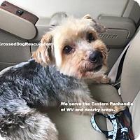 Adopt A Pet :: Murphy - Hedgesville, WV