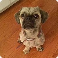 Adopt A Pet :: Cody on LI NY - Providence, RI