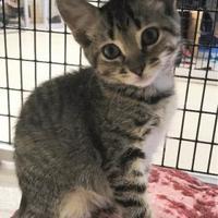 Adopt A Pet :: Misty - Washington, IA