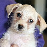 Adopt A Pet :: Parker - Pacific Grove, CA