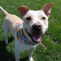 Adopt A Pet :: Simon - Wilmington, DE