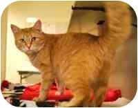 Domestic Mediumhair Cat for adoption in Walker, Michigan - Kitara