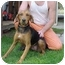 Photo 1 - Hound (Unknown Type) Mix Dog for adoption in Gladwin, Michigan - Hound