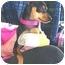 Photo 3 - Miniature Pinscher Puppy for adoption in Vista, California - Zito