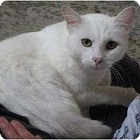 Adopt A Pet :: King Arthur - Mobile, AL