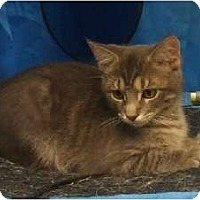 Adopt A Pet :: Pepper - Greenville, SC