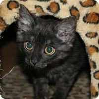 Adopt A Pet :: Cappuccino - Santa Rosa, CA