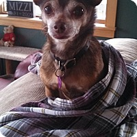 Adopt A Pet :: Minky - in Maine - kennebunkport, ME