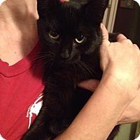 Adopt A Pet :: Peanut - North Highlands, CA