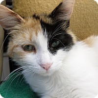 Adopt A Pet :: Little Miss - Lake Charles, LA