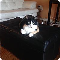 Adopt A Pet :: Cammie: Urgent - Piscataway, NJ