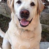 Adopt A Pet :: Brady Boy - Torrance, CA