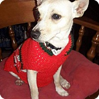 Basenji/Chihuahua Mix Dog for adoption in Victorville, California - Tanner