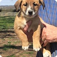Adopt A Pet :: Kylee - Providence, RI