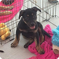 Adopt A Pet :: Snickers - Acworth, GA