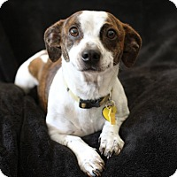 Adopt A Pet :: Kevin - Los Angeles, CA