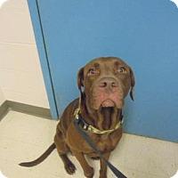 Adopt A Pet :: Benji - Gulfport, MS