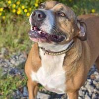 Adopt A Pet :: Tori - Helena, AL
