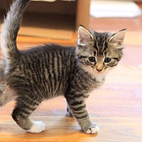 Adopt A Pet :: Sarah - Forest Hills, NY
