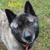 Adopt A Pet :: Molly *SEEKING DOG-SAVVY* - Decatur, GA