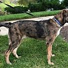 Adopt A Pet :: Zuko