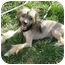 Photo 3 - Chinese Crested Puppy for adoption in Meridian, Idaho - Tatum
