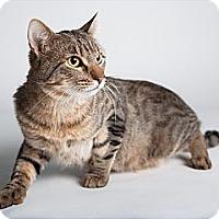 Adopt A Pet :: Rocky Road - Rockaway, NJ