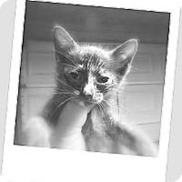 Adopt A Pet :: Mousy - Owosso, MI