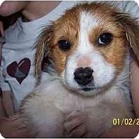 Adopt A Pet :: Nibbles - Honaker, VA