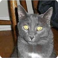 Adopt A Pet :: Yodi - Lombard, IL