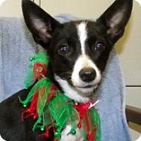 Adopt A Pet :: Little doll Bette - Baltimore, MD