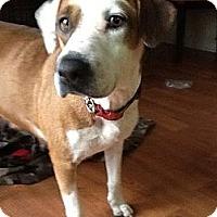 Adopt A Pet :: Lady - Apex, NC