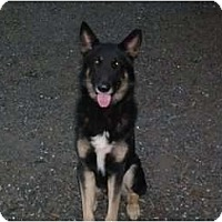 Adopt A Pet :: Ranger - Green Cove Springs, FL