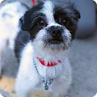 Adopt A Pet :: Ziggy - Tinton Falls, NJ