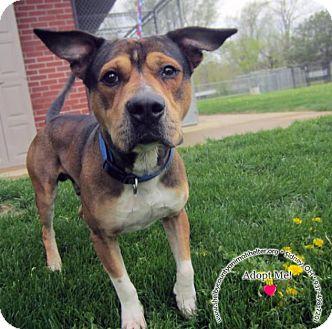 Shepherd (Unknown Type) Mix Dog for adoption in Sidney, Ohio - Roscoe