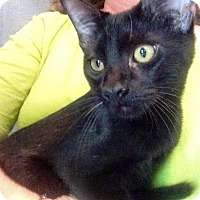 Adopt A Pet :: Marshall - McDonough, GA