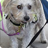Adopt A Pet :: Millie - Ogden, UT
