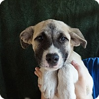 Adopt A Pet :: Grace - Oviedo, FL