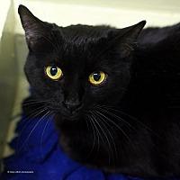 Adopt A Pet :: Pippy - Tucson, AZ