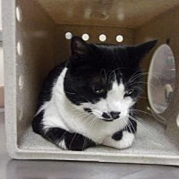 Adopt A Pet :: Alice - Reno, NV