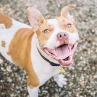 Adopt A Pet :: Nymeria 58 - Cleveland, OH